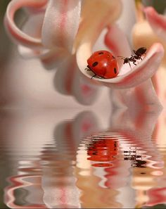 A ladybug and an ant. Beautiful photograph!