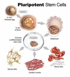 embryonic stem cell culture