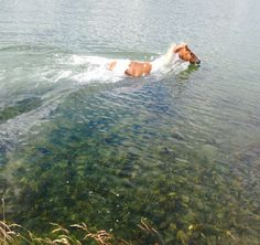 Amy Fadden submitted this picture of Biscuit cooling off after some exercise. Funny Horses, Gentle Giant, Horse Love, Strand, Sunny Days, Beach, Biscuit, Amy, Pictures
