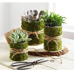 Create a calming oasis with these easy #DIY Upcycled Moss-Wrapped Soup Can Organizers #recycling #upcycling