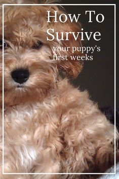 Surviving Puppy Overwhelm, 15 Lifesaving Tips To Help You Is it normal to feel completely overwhelmed by your new puppy? Are you suffering from Puppy Overwhelm Here is 15 tips to help you survive the first few weeks after bringing your puppy home Puppies Tips, Mutt Puppies, Fluffy Puppies, Puppy Biting, Easiest Dogs To Train, Dog Books, Aggressive Dog, Dog Training Tips, Leash Training
