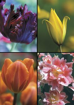 I think I'm going to try my hand at planting some bulbs this year.