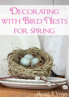 Decorating with Bird Nests for Spring