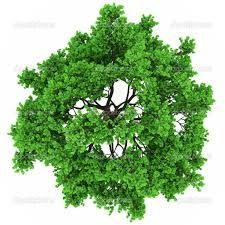 tree vector plan - Google 検索