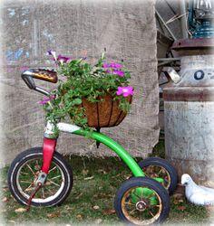 Vintage Tricycle