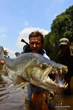 Goliath tigerfish on