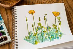 California poppy sketch