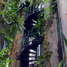 Iron spiral staircases as trellises