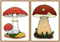 Ideenreise: Pilze des Waldes