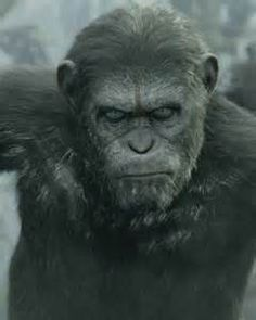 Dawn of the Planet of the Apes: Koba