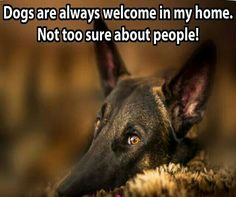 The German Shepherd Animal Lover Quotes, Rainbow Bridge, German Shepherd Dogs, Best Dogs, Funny Stuff, Best Friends, Signs, Memes, Animals