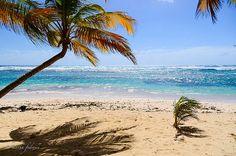 cocotiers vue mer