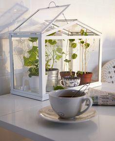 *Socker Drivhus fra Ikea