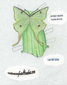 Moth costume for cat