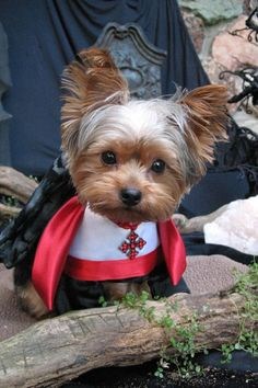 Count Dracula never looked so cute.