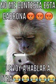 Funny Emoji Faces, Memes Funny Faces, Funny Quotes, Funny Spanish Memes, Spanish Humor, Spanish Quotes, Funny Animal Jokes, Funny Animals, Happy Birthday For Her