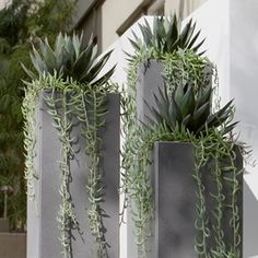 Metal containers with Agave 'Blue Glow' and trailing Senecio radicans. Would work in the landscape where the tall shrub died in the backyard in AZ. Succulents In Containers, Container Plants, Cacti And Succulents, Planting Succulents, Container Gardening, Planting Flowers, Metal Containers, Outdoor Planters, Garden Planters