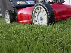 Get a head start for next year. Don't let your lawn take over while you look for the perfect lawn mower! Click through the pic to learn how to choose the perfect lawn mower for your lawn -- from reel to rotary,