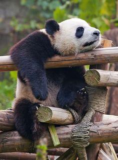 Uff ! I am tired, I am thinking to take a small nap. Zzzzzzz
