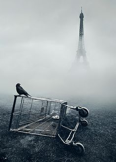 I watched rats foraging and feasting late at night right beside the Eiffel tower.  This pic reminds me of that.