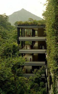 toit végétal, un bâtiment vert impressionnant