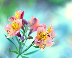 Flower Picture Peach and Aqua Wall Art Nature by PureNaturePhotos