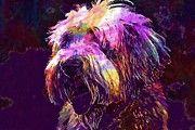 "New artwork for sale! - "" Dog Bearded Collie Collie Beautiful  by PixBreak Art "" - http://ift.tt/2tORyLJ"