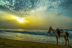 A new beginning#sea #sunrise #positivevibes #traveldairie #nature #photography #photooftheday #merinabeach #chennai #journeyforarts