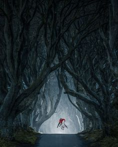 Mastepiece by EyeEm  |  Lorenz Holder captured Senad Grosic flying in the magical Game of Thrones location, The Dark Hedges, Northern Ireland.