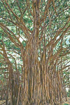 Print of Banyan Tree Painting on the North by ToImagineIsToBe