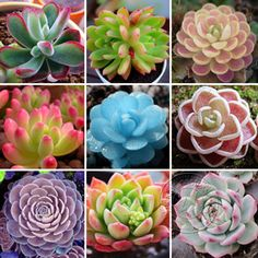 60pcs Succulents Seeds Potted Flowers Radiation Protection Fleshy Plants Seeds #1840store