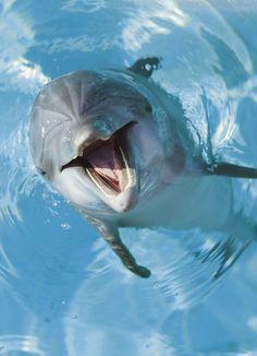 /dolfijn