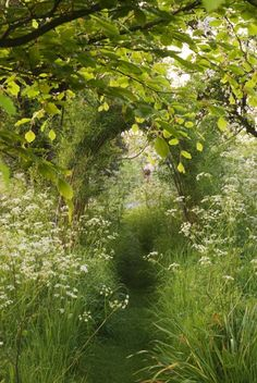 """A Cottage Garden: Heather Edwards The Old Malthouse, Wiltshire, England The secret garden """"A mown path leads through a sea of cow parsley (Anthriscus sylvestris) to a willow (Salix) arch on a still, early, summer morning."""