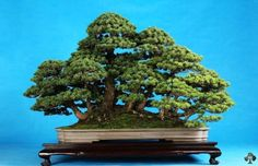 Penjing forest