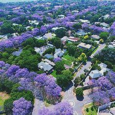 Jacarandas blooming in Johannesburg, South Africa Tree Tunnel, Japan Garden, 8bit Art, Pretoria, City Photography, Belleza Natural, Balcony Garden, Pretty Flowers, Lavender Flowers