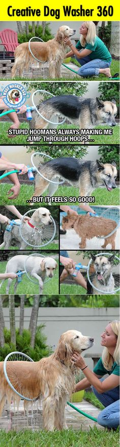 Innovative 360 degrees Dog washer! This dog washer is the must have for dog lovers. It is a 360 degrees washing system which can easily help you gently spray, clean, and wash your dog in less than one minute. via amazon.com Read more at http://loldamn.com/innovative-360-degrees-dog-washer.html#uGeIUJjegLhejBqV.99