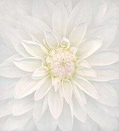 Imagem de flowers, white, and photography