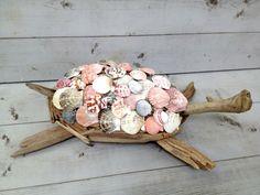 Driftwood Seashell Turtle