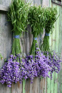 Bunches of Lavender hanging up to Dry ....