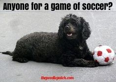 ANYONE FOR A GAME OF SOCCER???