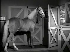 Ed ~ Bamboo Harvester was the name of the Palomino horse that portrayed Mister Ed on the CBS comedy series of the same name. Old Western Actors, Western Movies, Pretty Horses, Beautiful Horses, Animal Tv, Mister Ed, Horse Movies, Star Trek Images, Horses