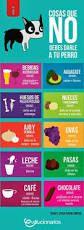 Resultado de imagen de tips para un mejor cuidado de tu mascota en esta primavera infografia animal planet
