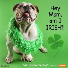 Happy Saint Patrick's day from our Nylabone family to your family! #StPatricksDay #dogs  #pets