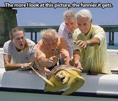 The Great Turtle Escape.