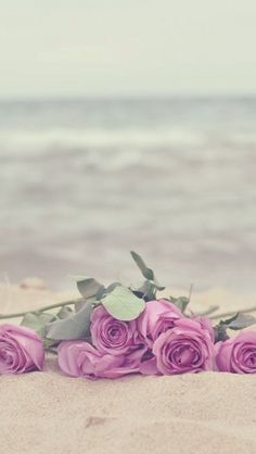 #Roses on the #beach! A great Combination for you #iPhoneWallpaper! Find more at http://iphone5retinawallpaper.com/