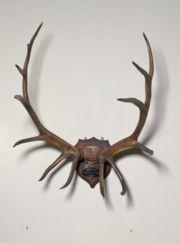 elk antlers - Monticello