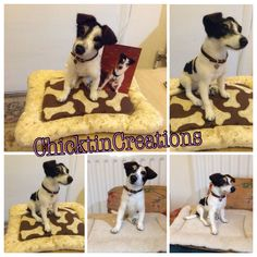 """Needle felted Terrier """"Mima"""" sitting on a bed made by """"Almazuelas de Colores"""""""