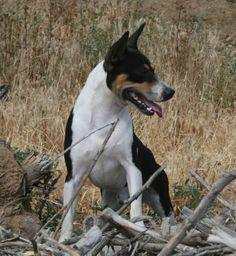 Lil Ranchin Decker Terriers