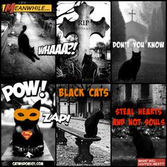 Spooktacular, Wow or What: Cemetery Black Cats