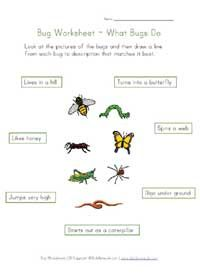 learn about bugs worksheet